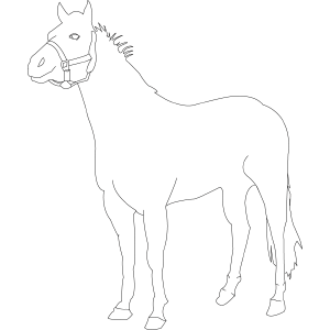 Horse 5 coloring page